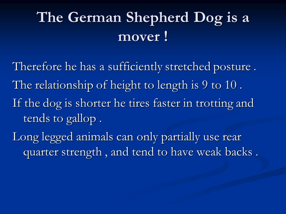 The German Shepherd Dog is a mover !