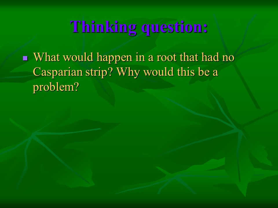 Thinking question: What would happen in a root that had no Casparian strip.