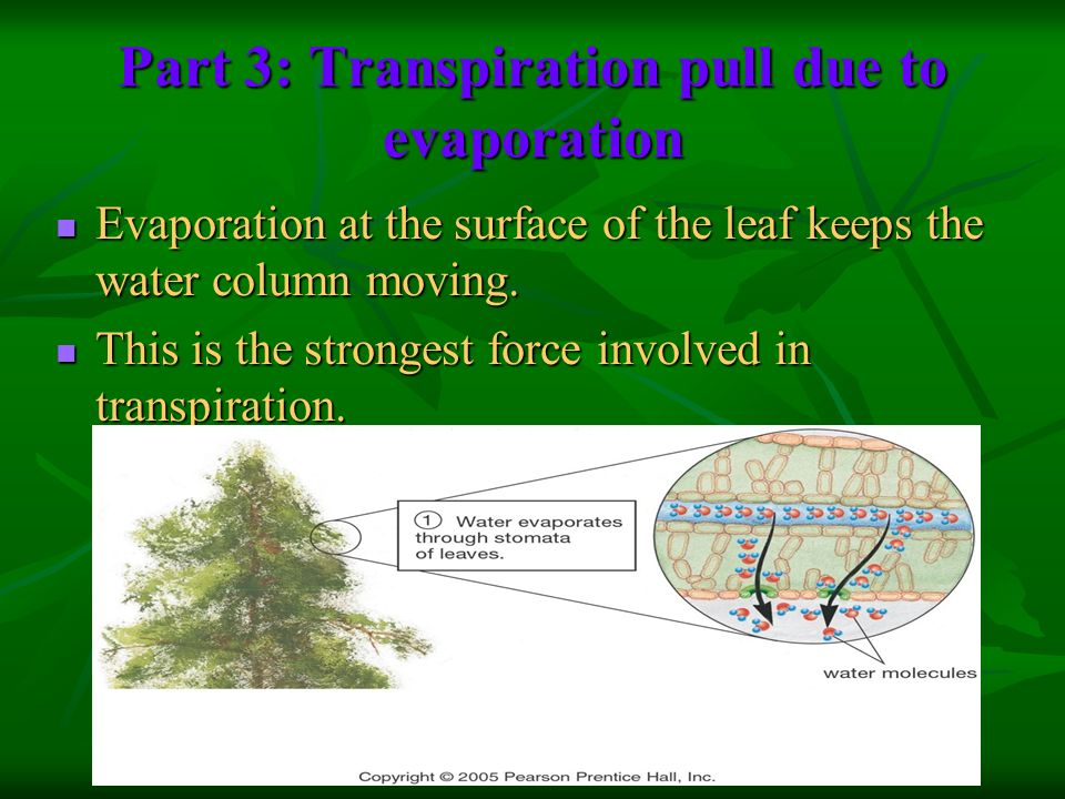 Part 3: Transpiration pull due to evaporation
