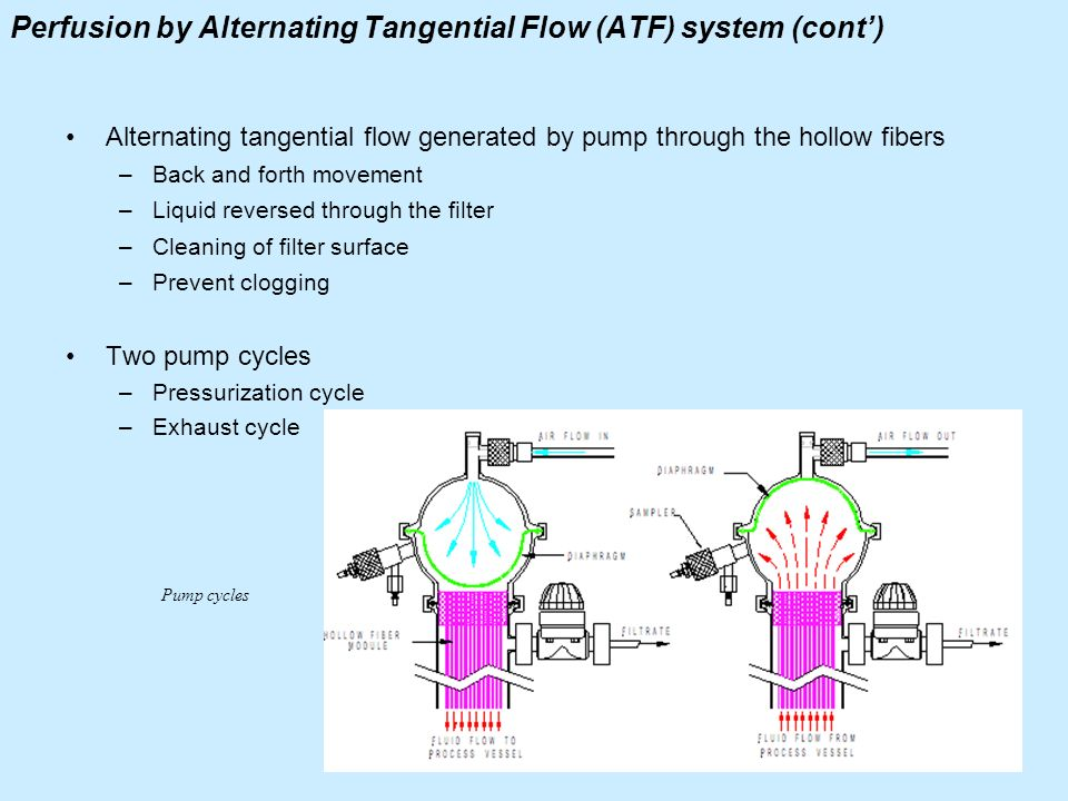 Perfusion by Alternating Tangential Flow (ATF) system (cont')