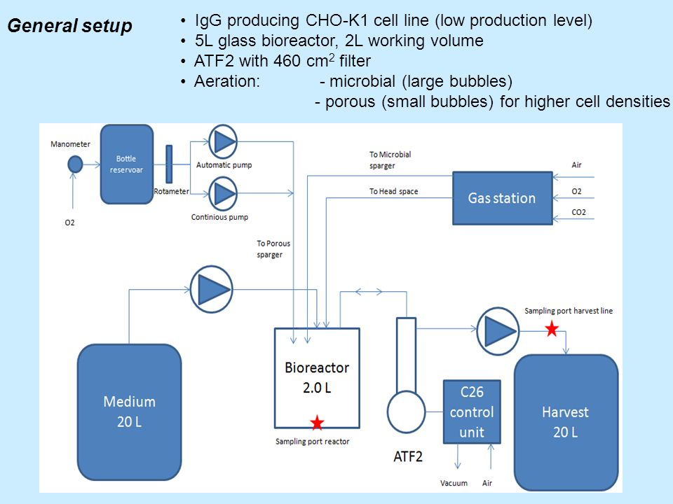 General setup IgG producing CHO-K1 cell line (low production level)