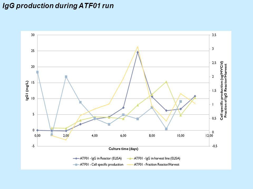 IgG production during ATF01 run