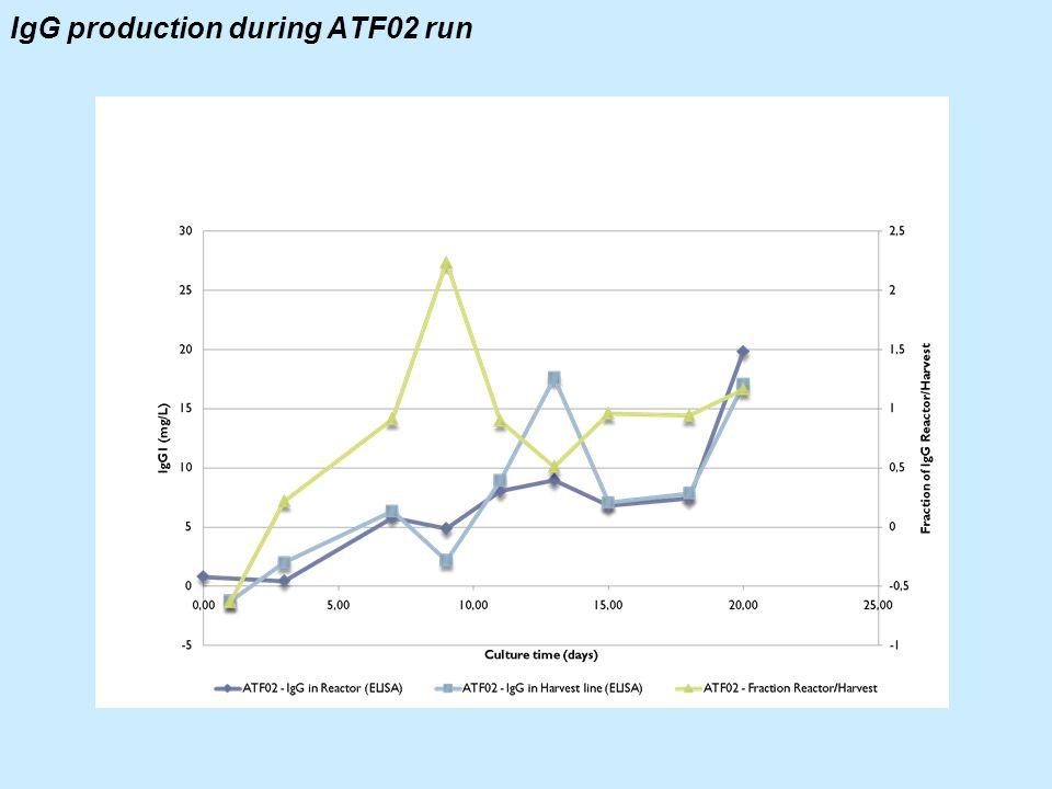 IgG production during ATF02 run