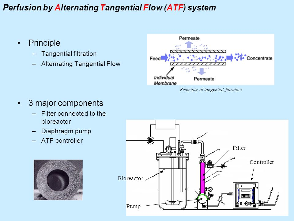 Perfusion by Alternating Tangential Flow (ATF) system