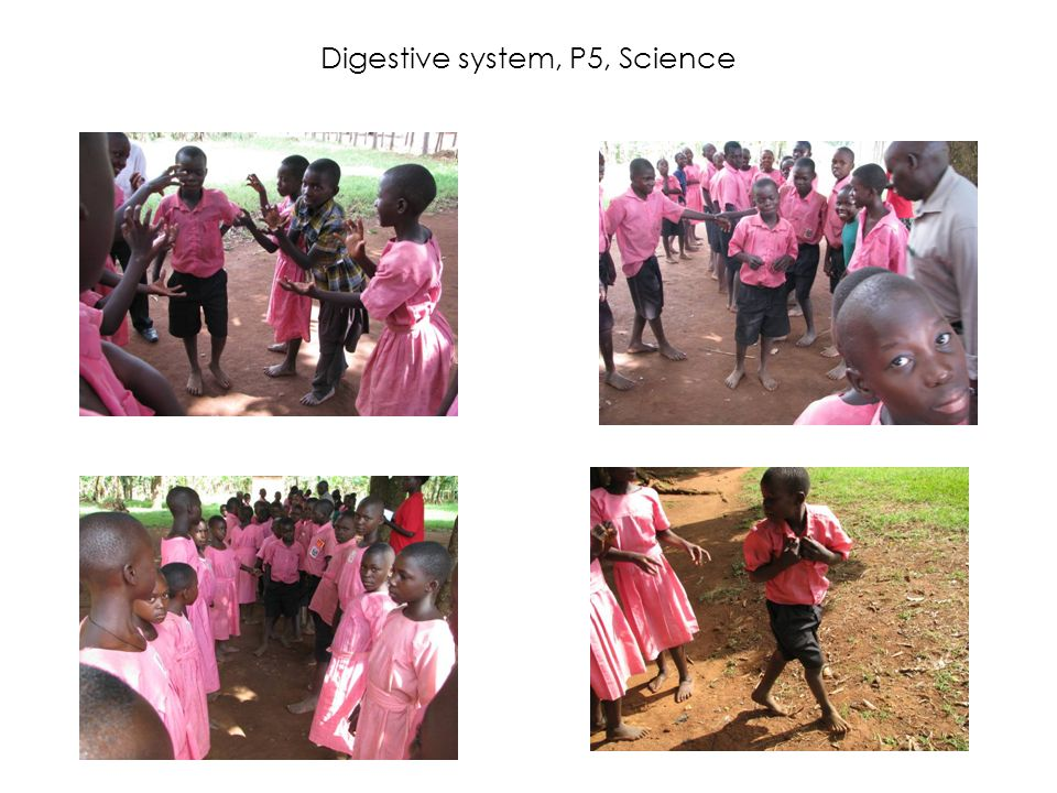 Digestive system, P5, Science