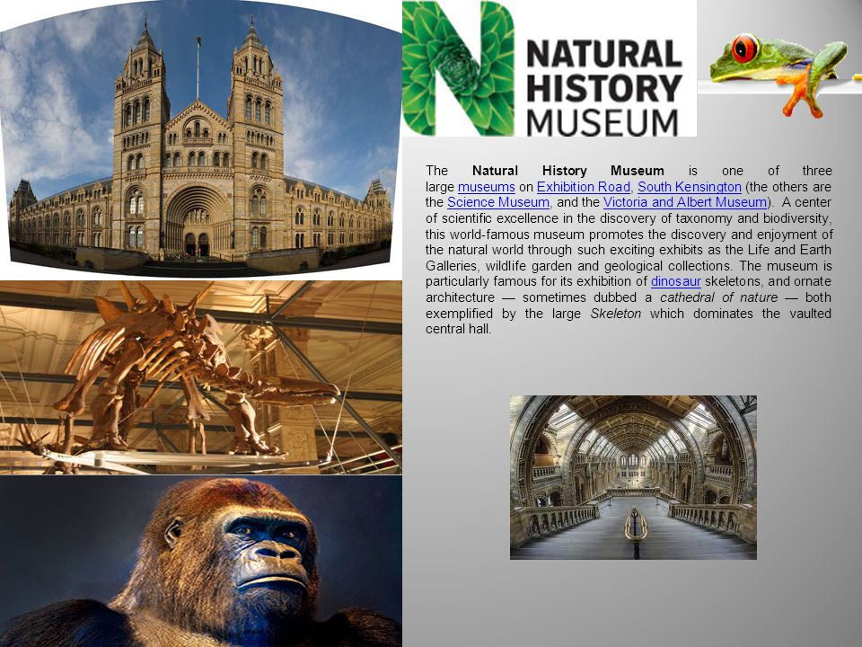 The Natural History Museum is one of three large museums on Exhibition Road, South Kensington (the others are the Science Museum, and the Victoria and Albert Museum).