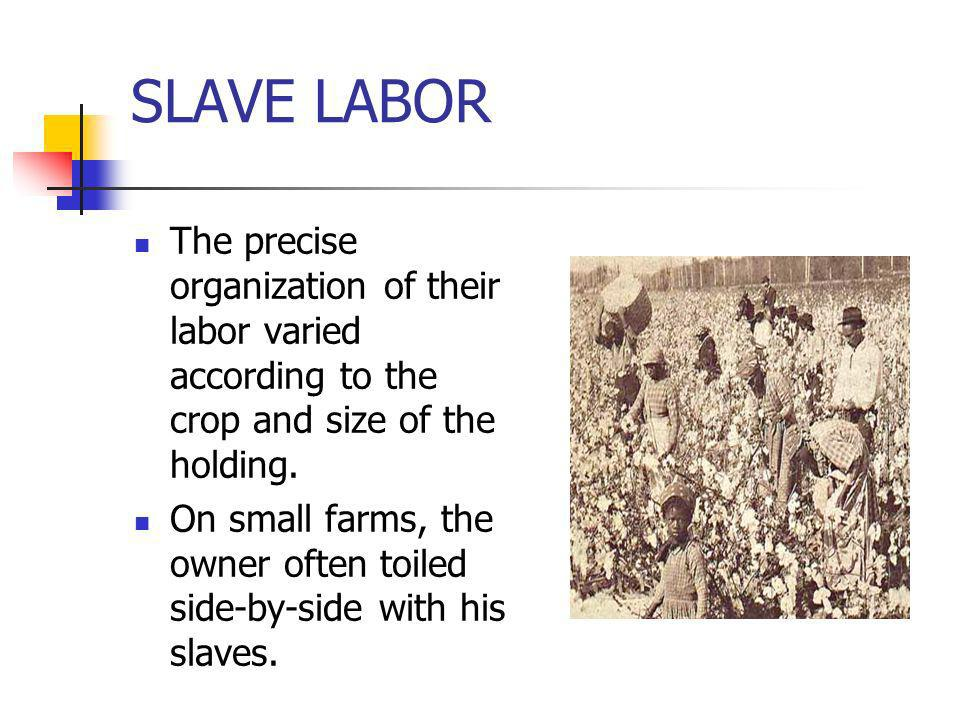SLAVE LABORThe precise organization of their labor varied according to the crop and size of the holding.