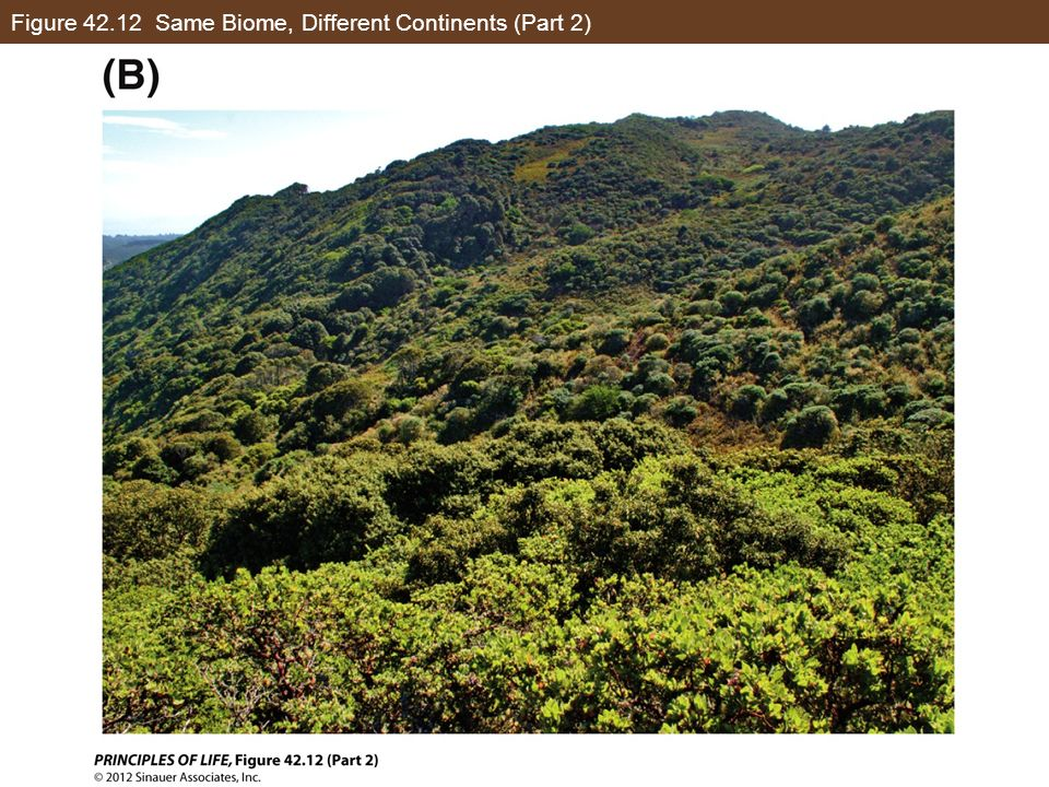 Figure 42.12 Same Biome, Different Continents (Part 2)