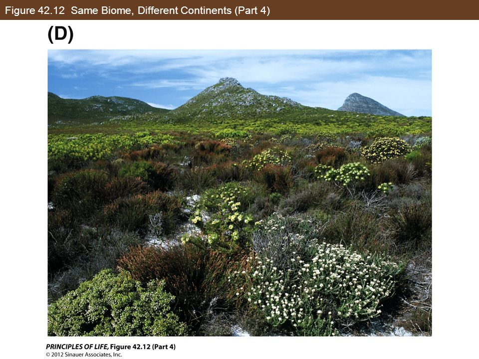 Figure 42.12 Same Biome, Different Continents (Part 4)