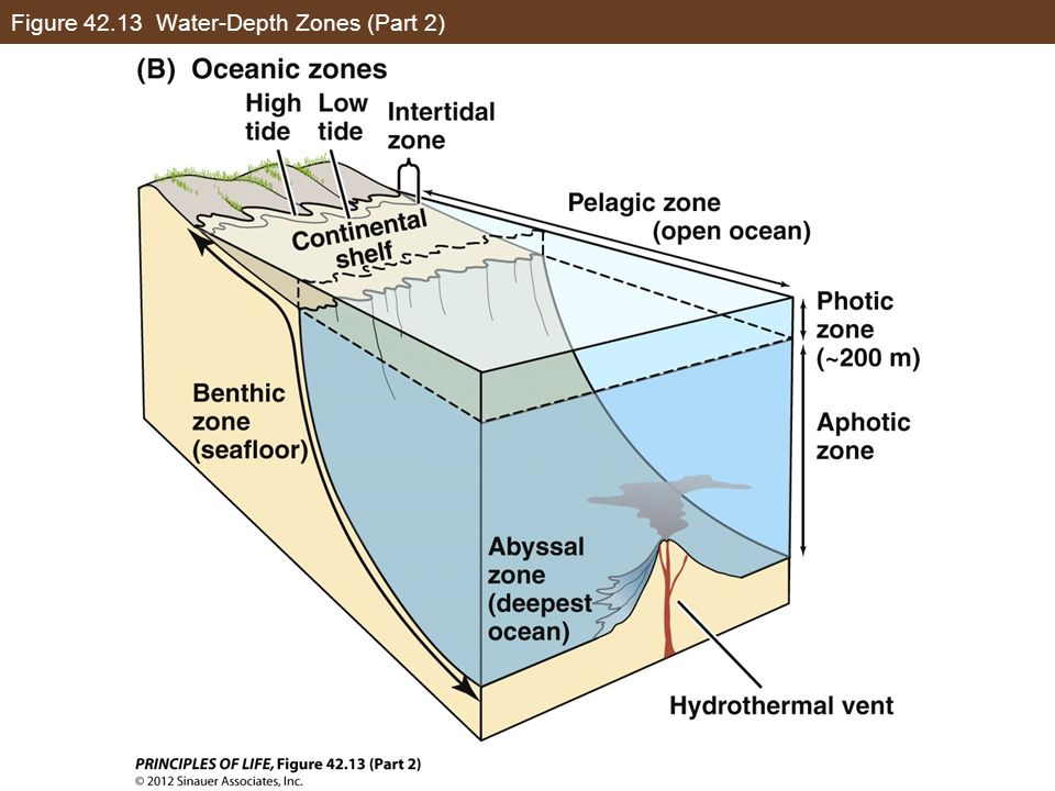 Figure Water-Depth Zones (Part 2)