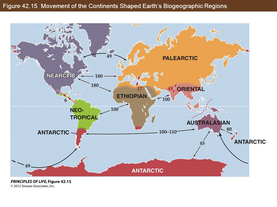 Figure Movement of the Continents Shaped Earth's Biogeographic Regions
