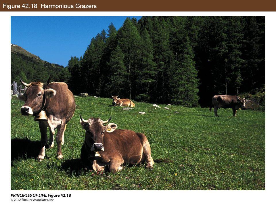 Figure 42.18 Harmonious Grazers