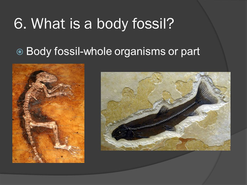 6. What is a body fossil Body fossil-whole organisms or part