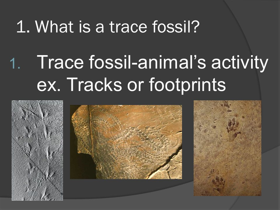 Trace fossil-animal's activity ex. Tracks or footprints