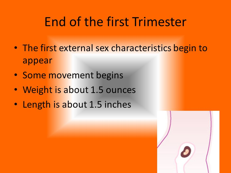 End of the first Trimester