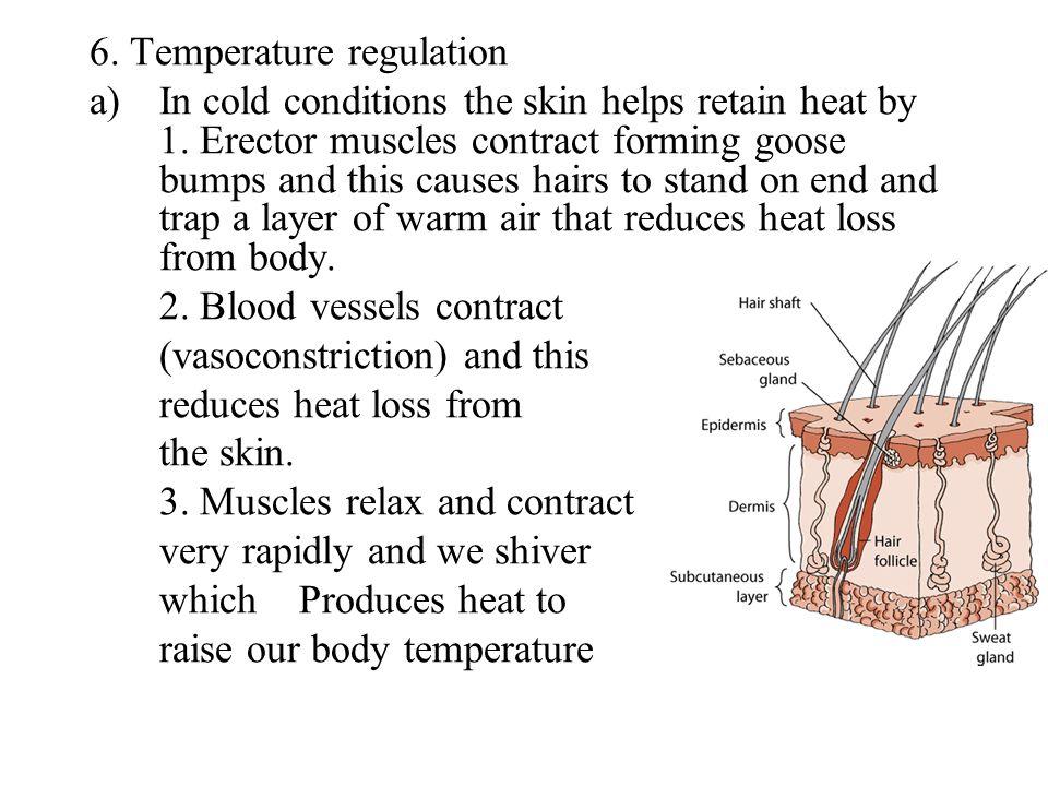 6. Temperature regulation