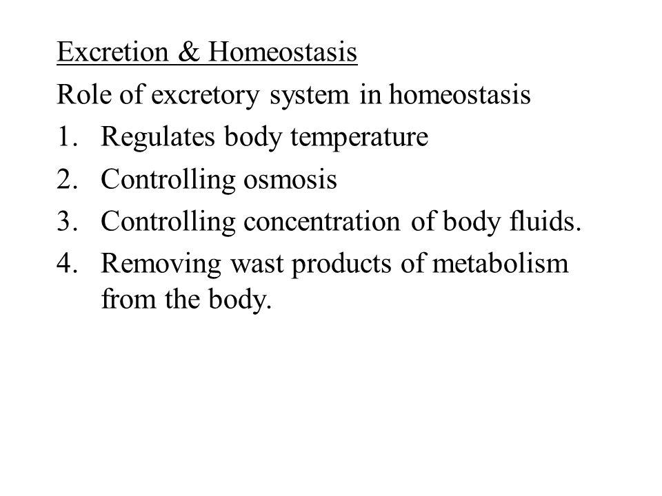 Excretion & Homeostasis