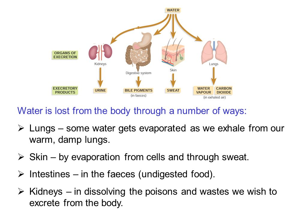 Water is lost from the body through a number of ways: