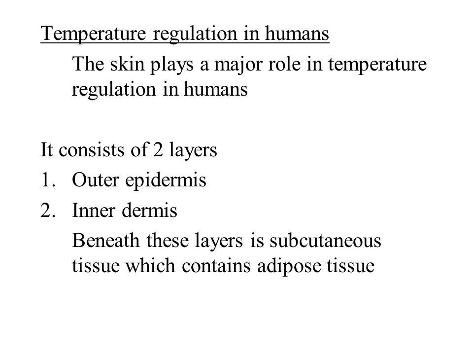 Temperature regulation in humans