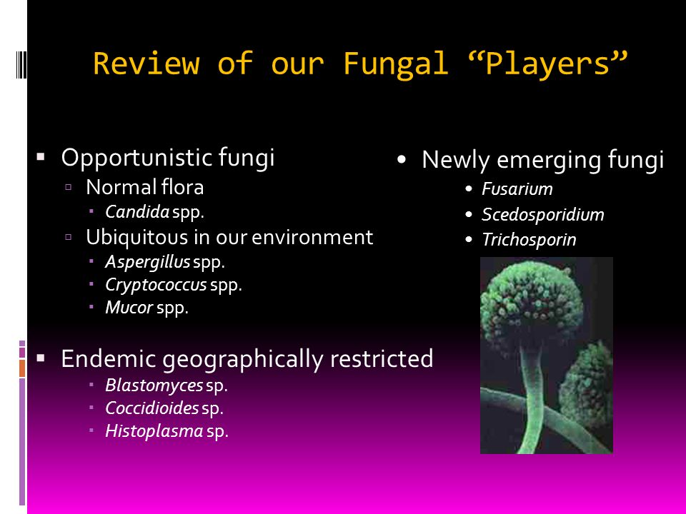 Review of our Fungal Players