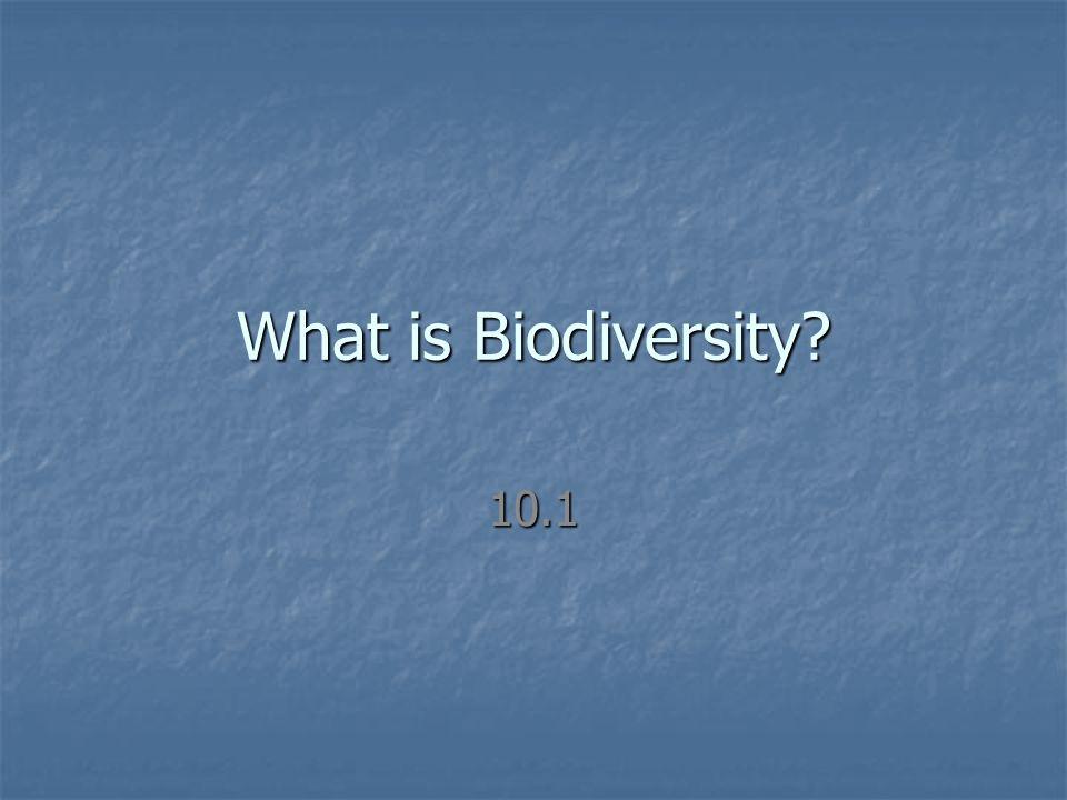 What is Biodiversity 10.1