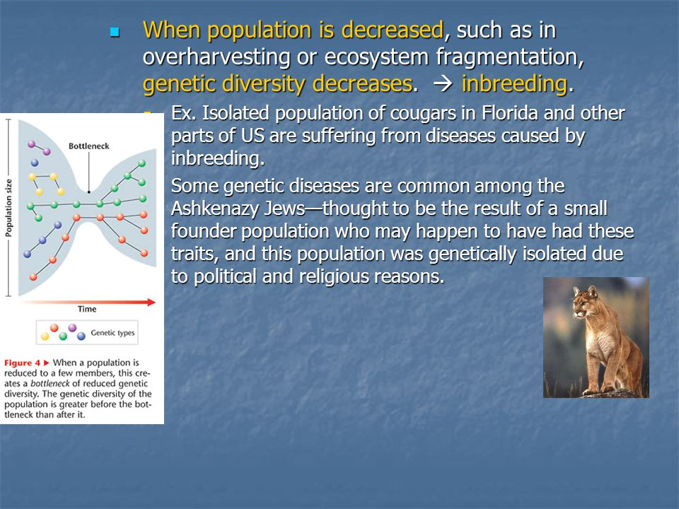 When population is decreased, such as in overharvesting or ecosystem fragmentation, genetic diversity decreases.  inbreeding.