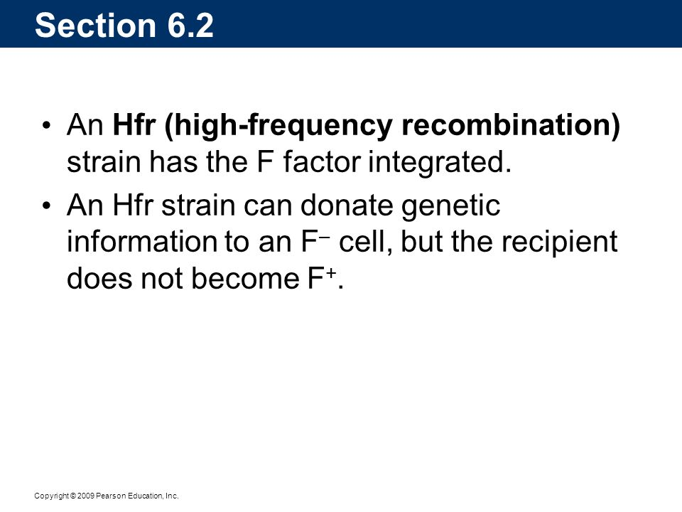 Section 6.2 An Hfr (high-frequency recombination) strain has the F factor integrated.
