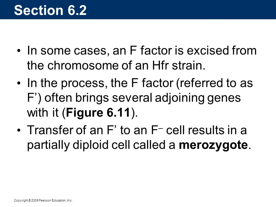 Section 6.2 In some cases, an F factor is excised from the chromosome of an Hfr strain.