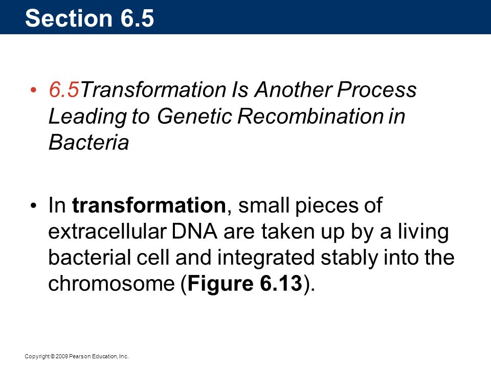 Section 6.5 6.5 Transformation Is Another Process Leading to Genetic Recombination in Bacteria.