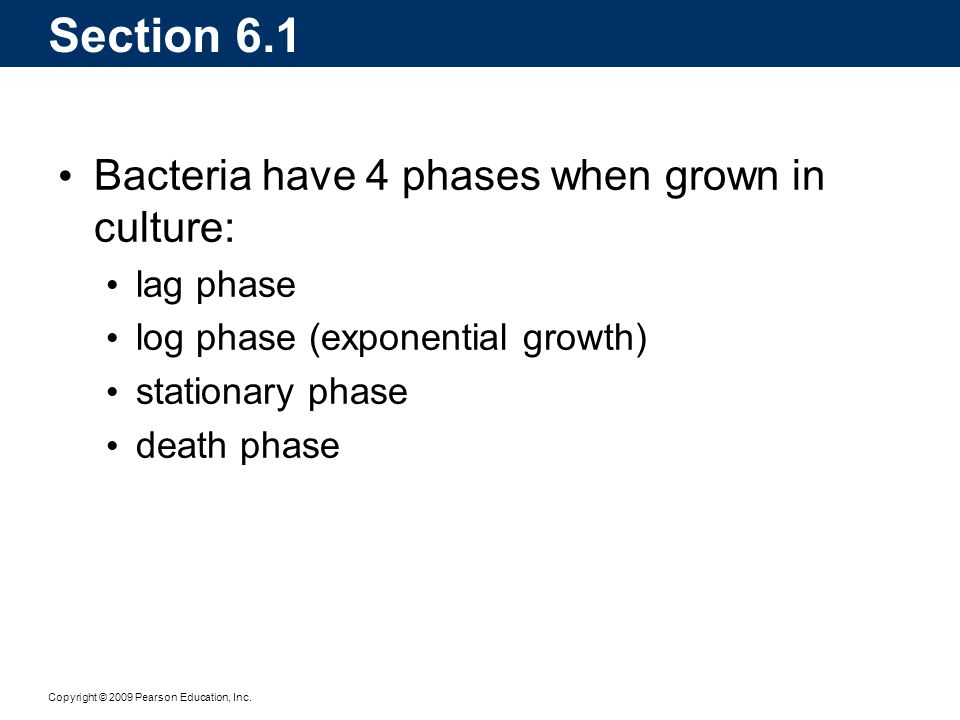 Section 6.1 Bacteria have 4 phases when grown in culture: lag phase