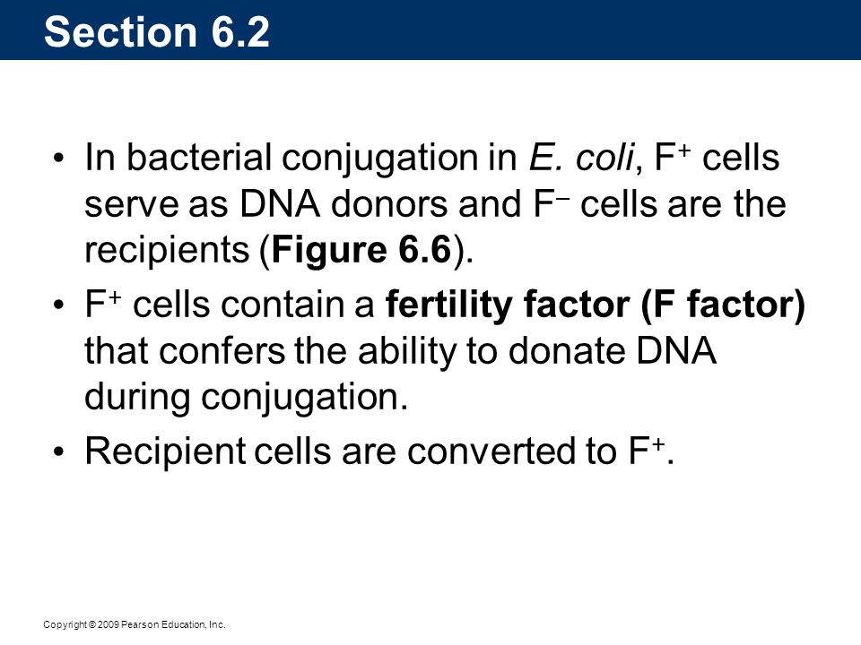 Section 6.2 In bacterial conjugation in E. coli, F+ cells serve as DNA donors and F– cells are the recipients (Figure 6.6).