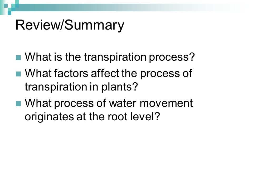 Review/Summary What is the transpiration process