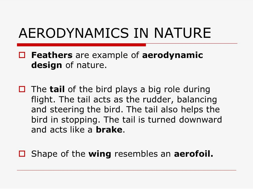 AERODYNAMICS IN NATURE