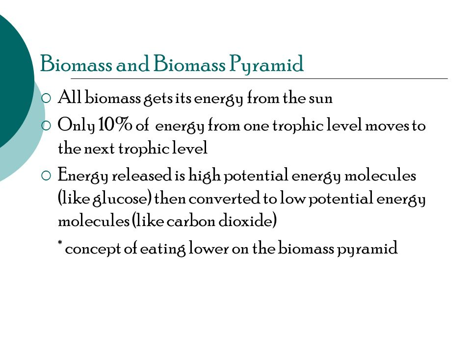 Biomass and Biomass Pyramid