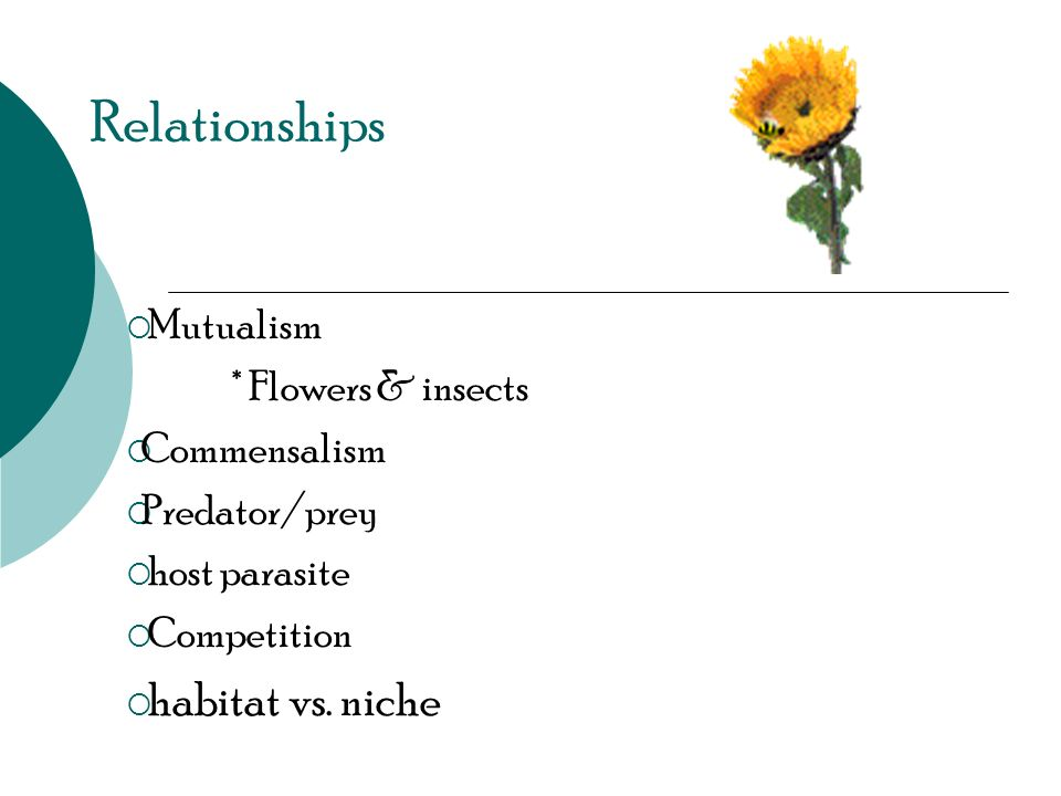 Relationships Mutualism * Flowers & insects Commensalism Predator/prey