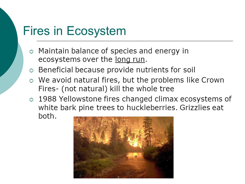 Fires in Ecosystem Maintain balance of species and energy in ecosystems over the long run. Beneficial because provide nutrients for soil.