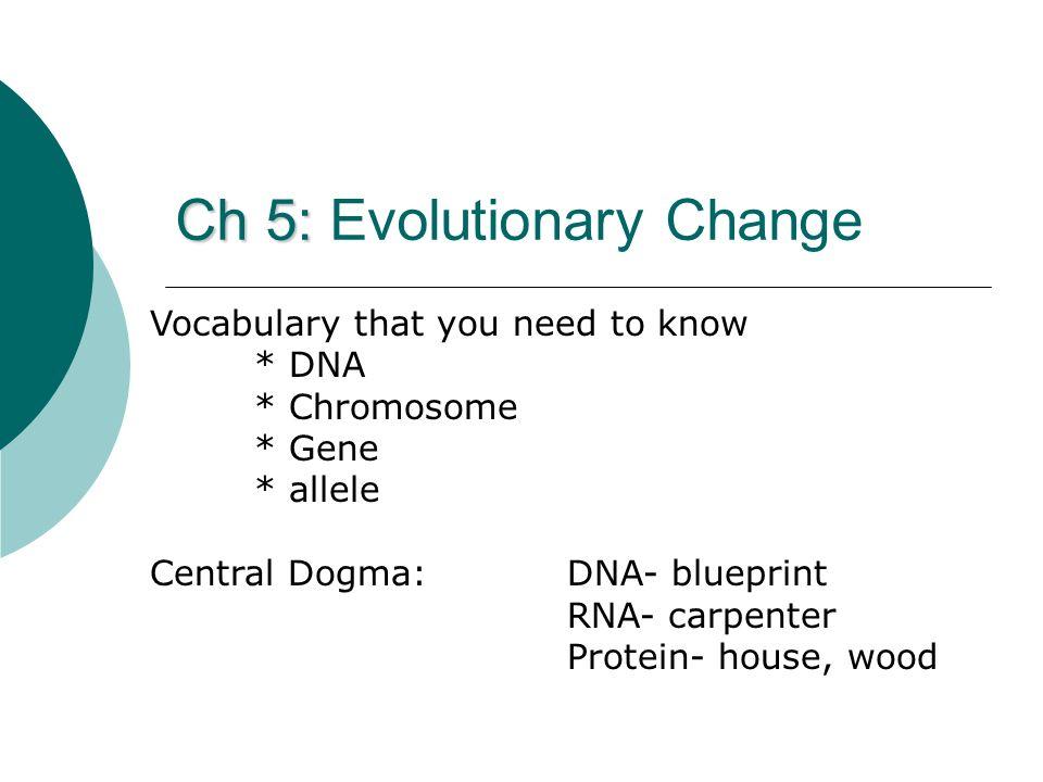 Ch 5: Evolutionary Change