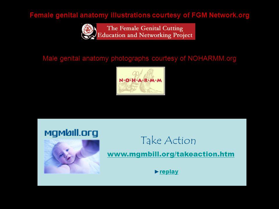 Female genital anatomy illustrations courtesy of FGM Network.org