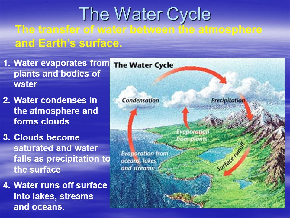 The Water Cycle The transfer of water between the atmosphere and Earth's surface. Water evaporates from plants and bodies of water.
