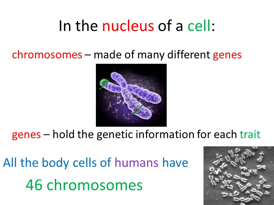 In the nucleus of a cell:
