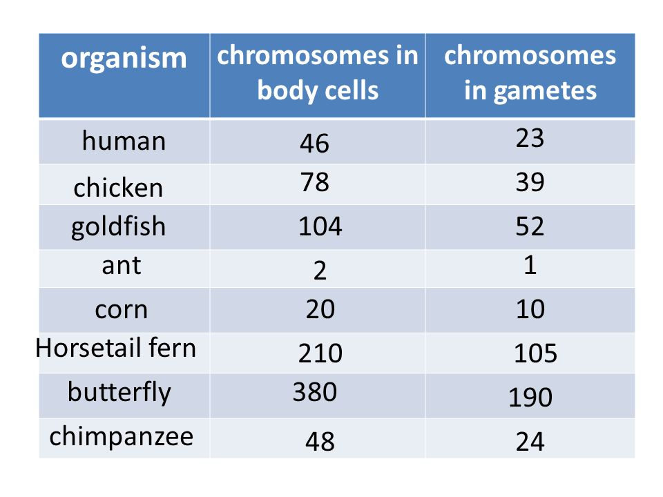 chromosomes in body cells chromosomes in gametes