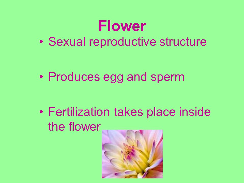 Flower Sexual reproductive structure Produces egg and sperm
