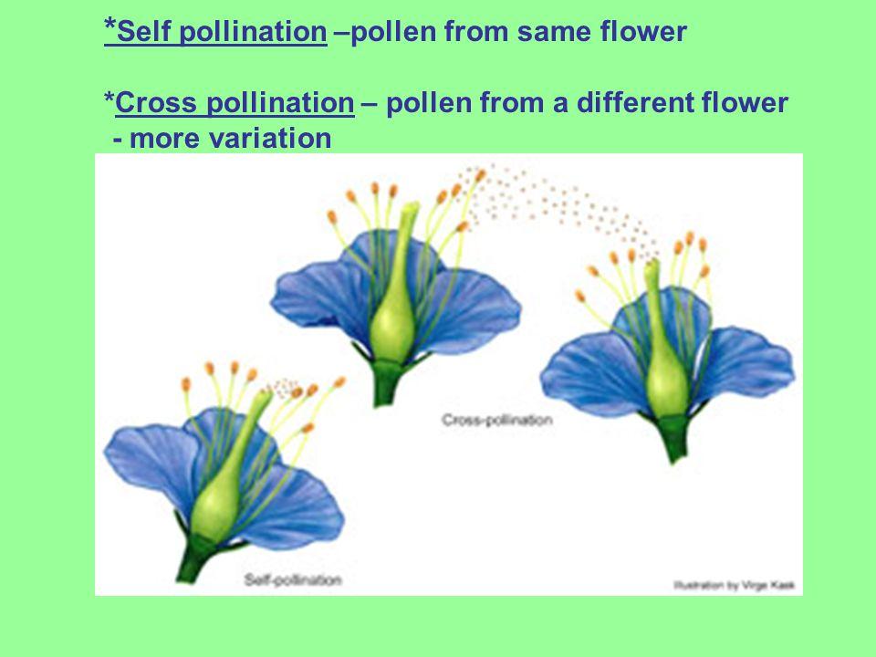 Self pollination –pollen from same flower