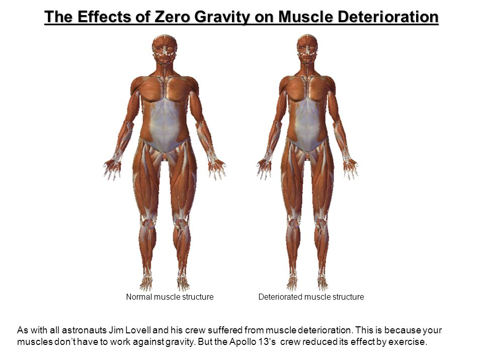 The Effects of Zero Gravity on Muscle Deterioration