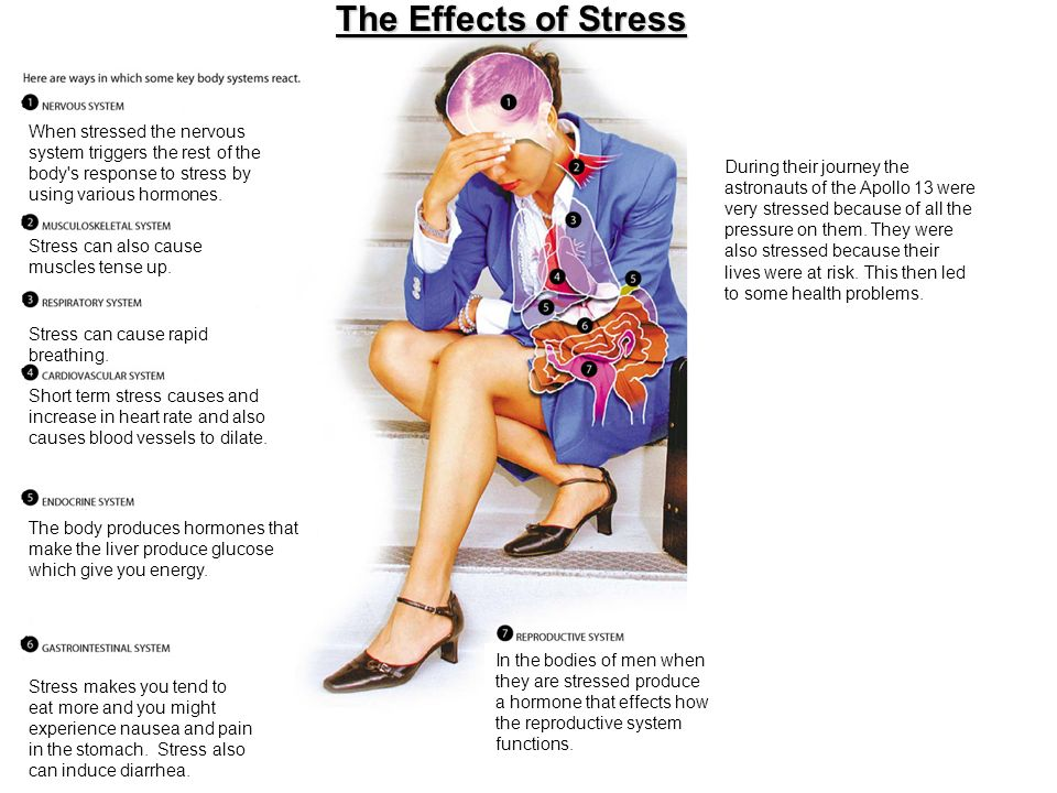 The Effects of Stress When stressed the nervous system triggers the rest of the body s response to stress by using various hormones.