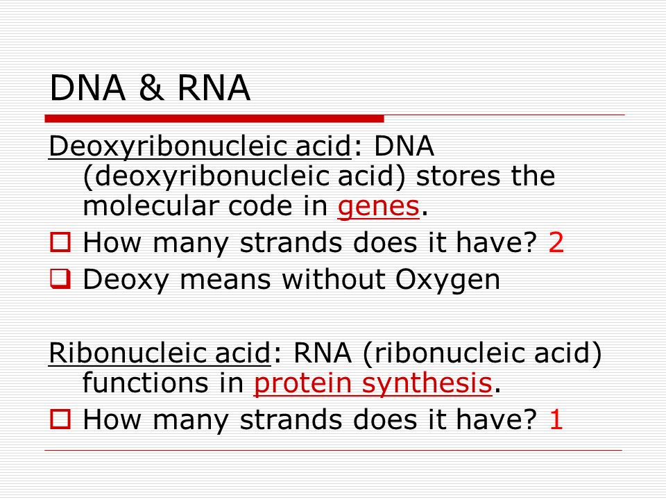 DNA & RNA Deoxyribonucleic acid: DNA (deoxyribonucleic acid) stores the molecular code in genes. How many strands does it have 2.