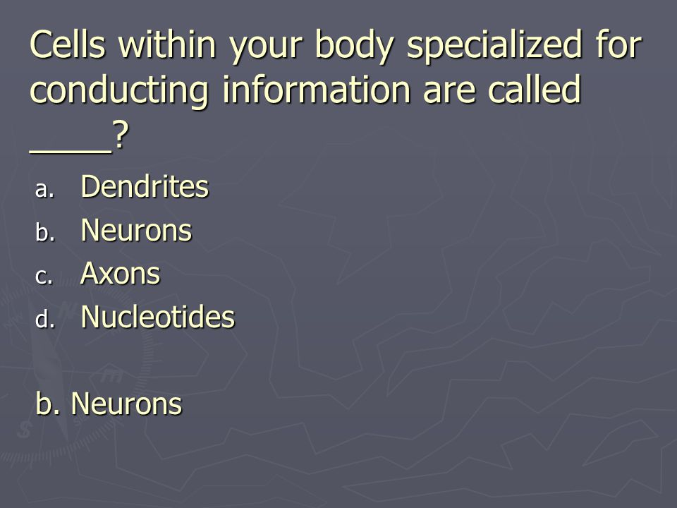 Cells within your body specialized for conducting information are called ____