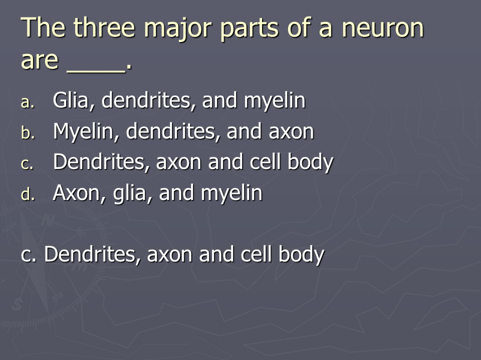The three major parts of a neuron are ____.