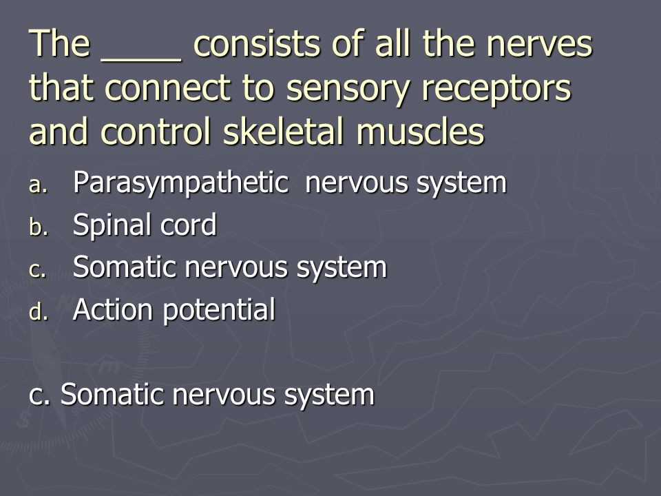 The ____ consists of all the nerves that connect to sensory receptors and control skeletal muscles