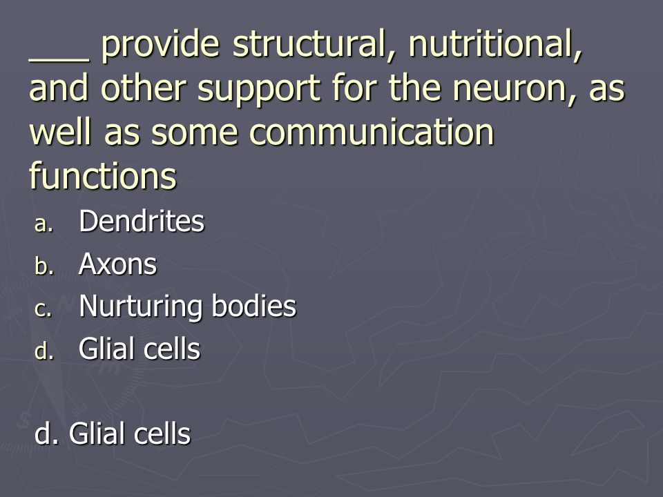 ___ provide structural, nutritional, and other support for the neuron, as well as some communication functions